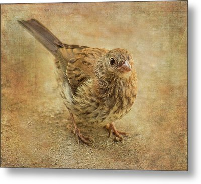 Are You My Mother? Metal Print