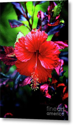 Red Hibiscus 2 Metal Print by Inspirational Photo Creations Audrey Woods