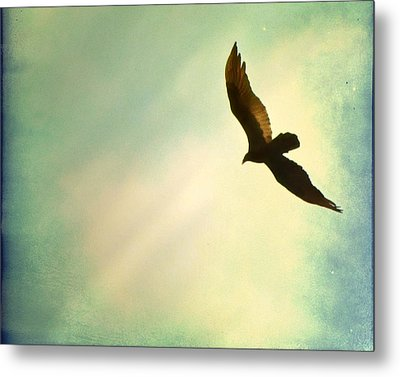 Soaring Metal Print by Amy Tyler