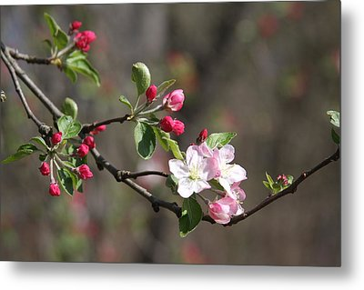 Metal Print featuring the photograph Blossom And Hope by Vadim Levin