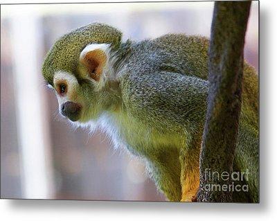 Squirrel Monkey Metal Print by Afrodita Ellerman