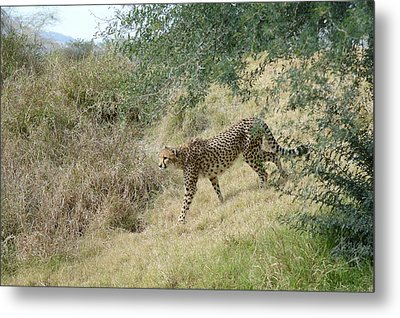 Metal Print featuring the photograph Descent by Fraida Gutovich