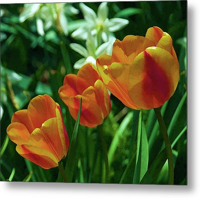 Metal Print featuring the photograph 3 Lips Tulips by Sheryl Thomas