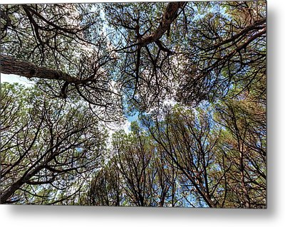 Pinewood Forest, Cecina, Tuscany, Italy Metal Print