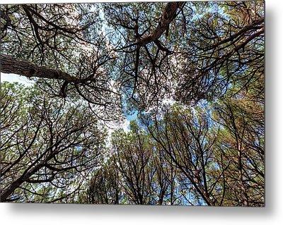 Pinewood Forest, Cecina, Tuscany, Italy Metal Print by Elenarts - Elena Duvernay photo
