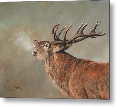 Metal Print featuring the painting Red Deer Stag by David Stribbling
