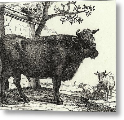 The Bull Metal Print by Paulus Potter
