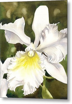 White Cattleya Orchid Metal Print by Alfred Ng