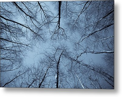 Trees In Epping Forest Metal Print