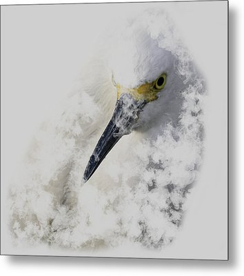 Metal Print featuring the photograph 4386 by Peter Holme III