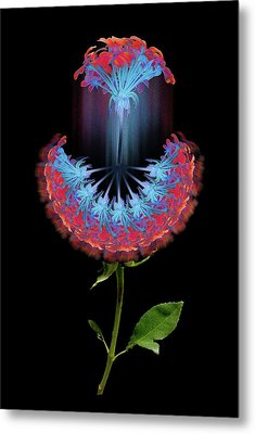Metal Print featuring the photograph 4389 by Peter Holme III