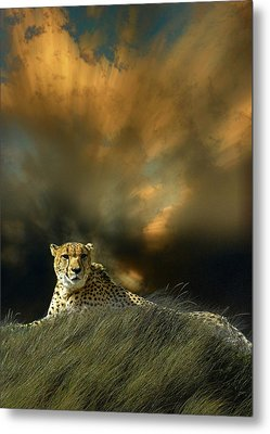 Metal Print featuring the photograph 4452 by Peter Holme III