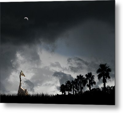 Metal Print featuring the photograph 4458 by Peter Holme III