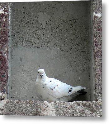 Peace Dove Metal Print