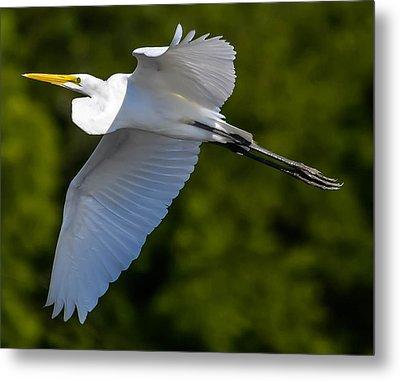 Great White Heron Metal Print