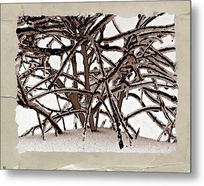 Grounded In Earth  - Series 1 Metal Print by Debra     Vatalaro