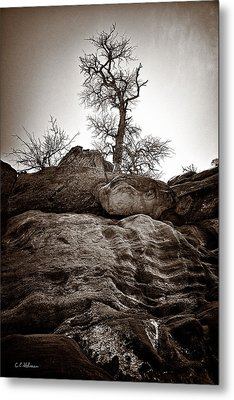 A Barren Perch - Sepia Metal Print by Christopher Holmes