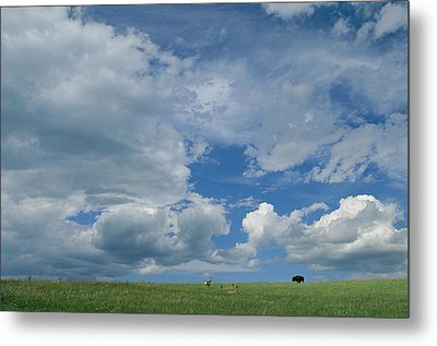 A Cloud-filled Sky Over Pronghorns Metal Print by Annie Griffiths