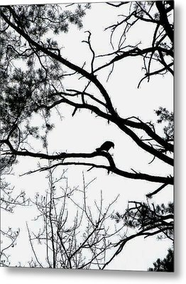 A Crow Shook Down On Me The Dust Of Snow Metal Print