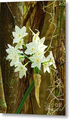 A Cup Full Of Southern Daffodil Beauty  Metal Print