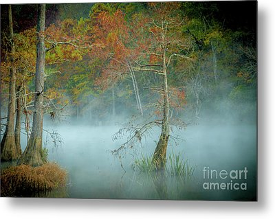 Metal Print featuring the photograph A Dancing Cypress by Iris Greenwell