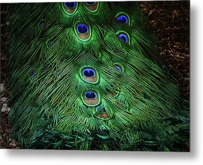 A Different Point Of View Metal Print by Elaine Malott
