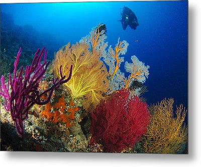 A Diver Looks On At A Colorful Reef Metal Print by Steve Jones
