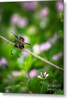 A Dragonfly Break Metal Print by Tamyra Ayles