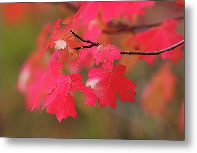 A Flash Of Autumn Metal Print