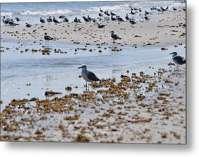 Metal Print featuring the photograph A Flock Of Seagulls by John Collins