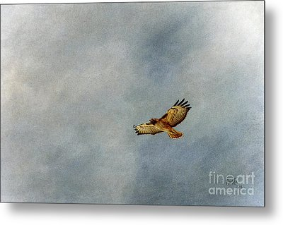 A Good Day To Fly Metal Print by Krista-