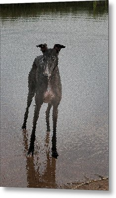 A Greyhound's Play Time Metal Print by Andrea Lawrence