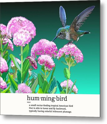 A Hummingbird Visits Metal Print