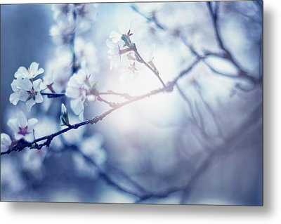 A Light Exists In Spring Metal Print