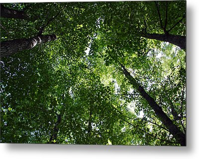 Metal Print featuring the photograph A Little Bit Of Heaven by Joanne Coyle