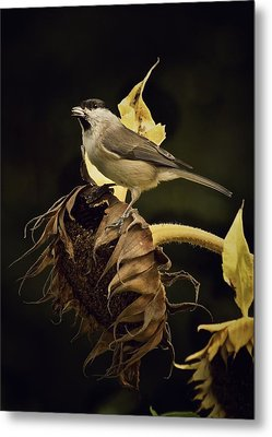 A Mouthful Metal Print