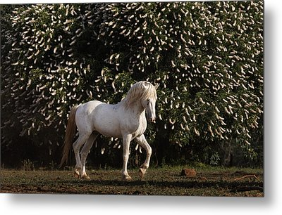 A Mustang Stallion In The Wild Horse Metal Print by Melissa Farlow