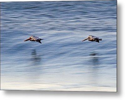 A Pair Of Brown Pelicans Flying Metal Print by Rich Reid
