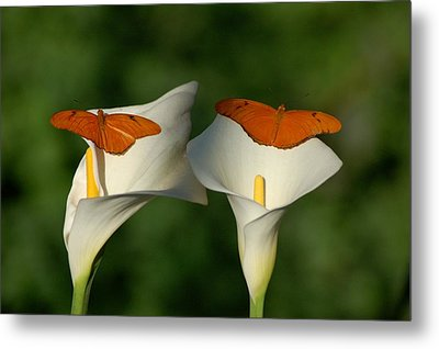A Pair Of Butterflies Land Upon A Pair Of Lilies Metal Print by Susan Heller