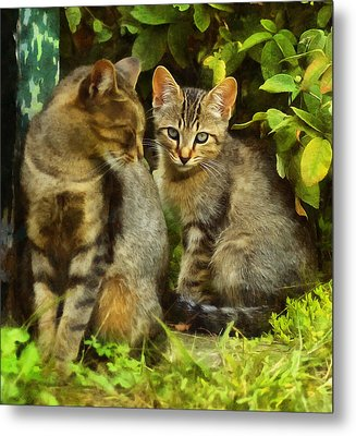 A Pair Of Feral Cats Metal Print