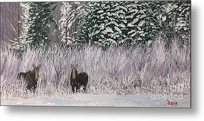 A Pair Of Moose Metal Print by Lorie Smith