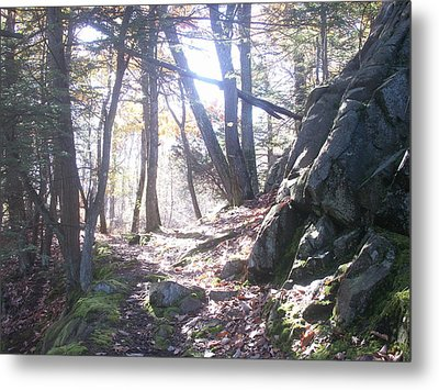 A Path Once Travelled Metal Print by Tony Ruggiero