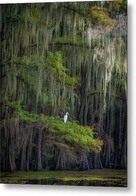 A Perch With A View Metal Print