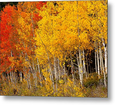 A Place In The Aspen Forest Metal Print by Tim Reaves