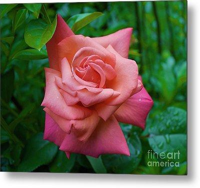 A Rose In Spring Metal Print
