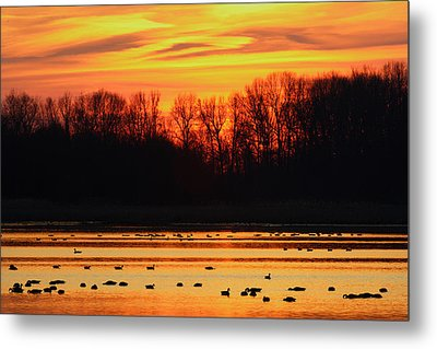 A Scene At Bombay Hook National Metal Print by George Grall