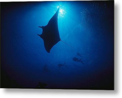 A Silhouetted Manta Ray Swims In Deep Metal Print by Raul Touzon