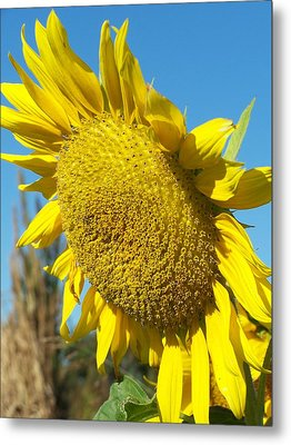 A Sunny Hello Metal Print by Sandy Collier