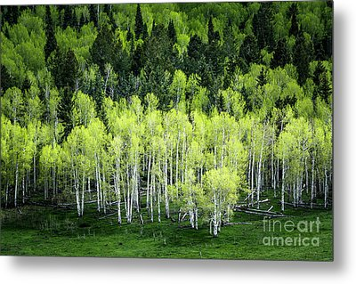 Metal Print featuring the photograph A Thousand Shades Of Green by The Forests Edge Photography - Diane Sandoval