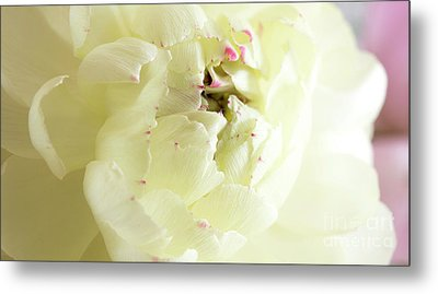 Metal Print featuring the photograph A Touch Of Pink by Wendy Wilton
